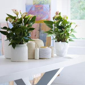 Potted plants at home
