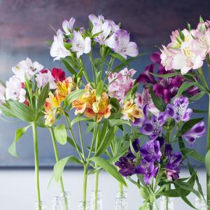 Alstroemeria - Flower of the Month - February
