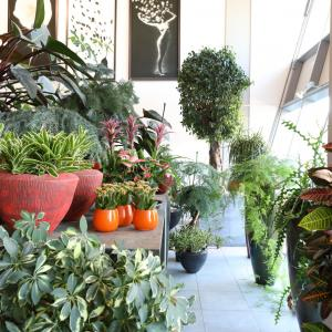 Plants in shop