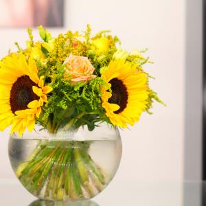 Helianthus care tips