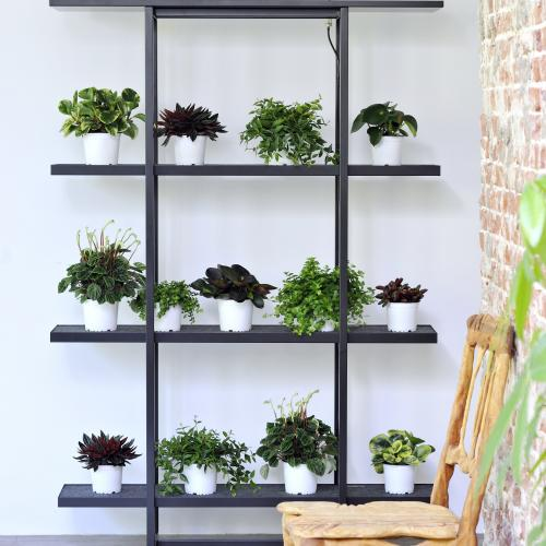 Shelf life potted plants_ BBH