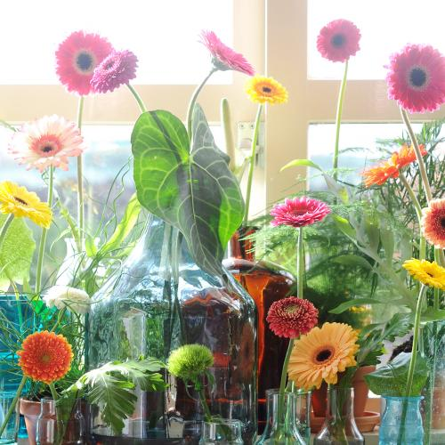Gerbera - Flower of the Month - April 2017