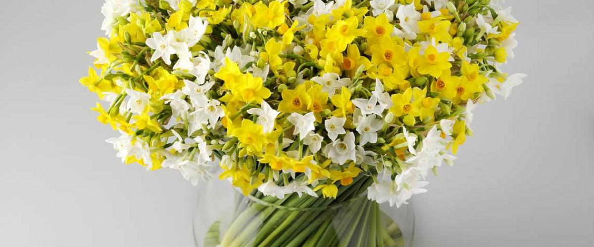 Narcissus Care Tips Chrysal